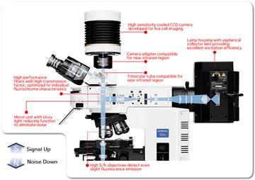 BX51/61OLYMPUS生物显微镜