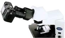 CX-31 OLYMPUS生物显微镜