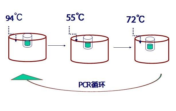 Pcr技术简史