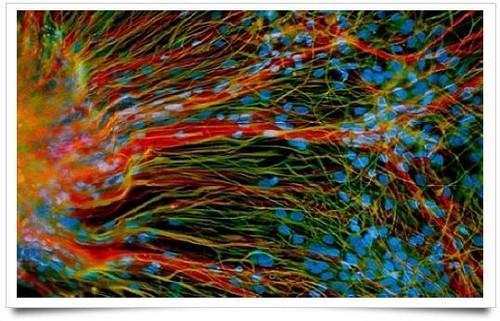 免疫荧光标记方细胞培养——印象派画作