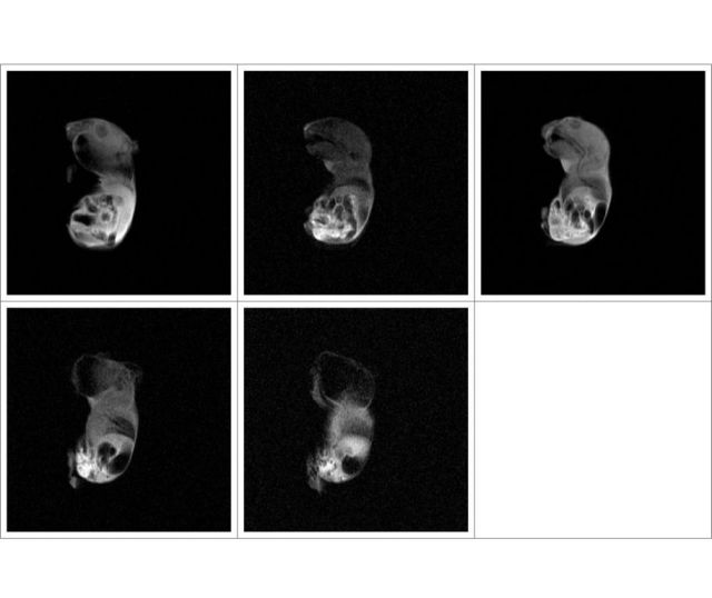实验动物核磁共振成像分析仪