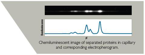 CB1000超灵敏度蛋白分析系统