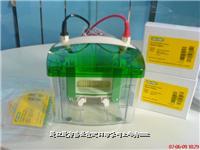 美国伯乐 Mini-PROTEAN Tetra MP4 电泳槽 价优 现货 13917814677