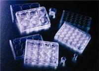 实验室细胞培养板 353043