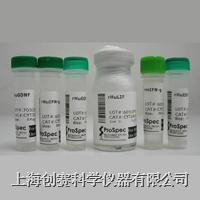 Recombinant Human VEGF165|重组人血管内皮生长因子 C22-105-05