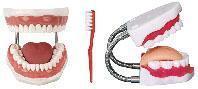 护理模型|牙护理保健模型 KAH/11