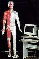 多媒體人體針灸穴位發光模型 -