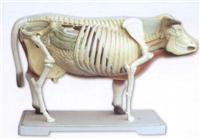 牛骨骼模型