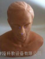 针灸头部训练模型 ZK1000TS