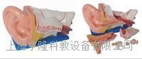 新型大耳解剖模型 KAH/A303C