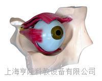 眼解剖模型 KAH2097