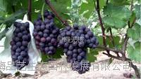 奥德农庄2012年苗木供应信息