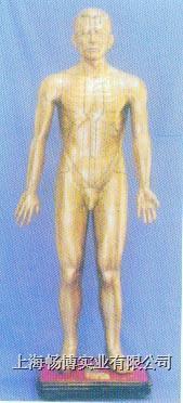 人体针灸模型|针灸铜人 GD-04010