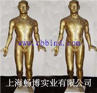 针灸铜人|针灸铜人模型|铜人模型 GD-04011 -1