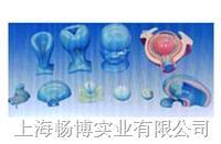 组织胚胎学模型|眼球的发生模型 SMO03