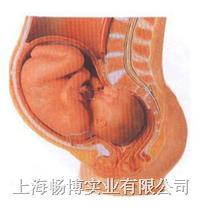人体胚胎模型|骨盆含妊娠九个月胎儿模型 GD/A42006