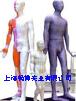 中医针灸模型.器材总汇