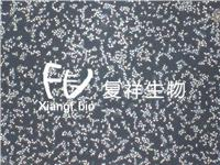 NR8383 大鼠肺泡巨噬細胞 CRL-2192