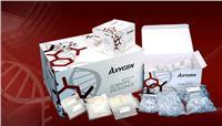 动植物基因组DNA制备试剂盒 AP-MN-MS-GDNA-50
