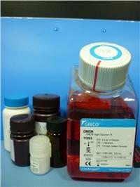 Collagenase胶原酶I(原装) orj-1020