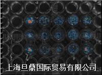 上海旦鼎代理实时在体生物光学分子影像系统 分子影像系统