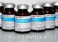 4',6-联脒-2-苯基吲哚二盐酸盐   10 mg  ,100 mg   , 10 ml(DAPI染色液)  ,  50 ml(DAPI染