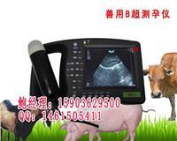 猪B超价格猪用B超机多少钱 HRQ-2000AV