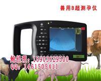 便携式动物B超机母猪用B超妊娠诊断仪 HRQ-5000AV