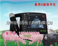 饲料公司猪用B超机多少钱一台母猪B超机价格 HRQ-2000AV