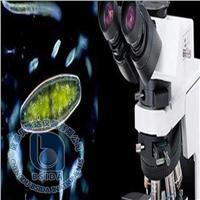 藻类辅助鉴定计数仪 Algacount R40
