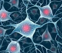 细胞共培养