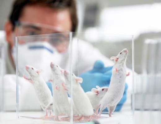 动物行为学实验