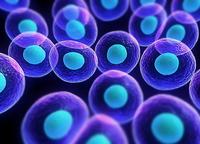 miRNA靶基因验证