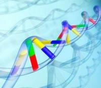 基因分型服務