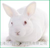 兔多克隆抗体定制服务