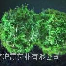 C8161【人黑色素瘤细胞】 人黑色素瘤细胞