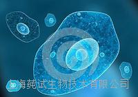 小鼠膀胱成纤维细胞说明书 CS-C3117