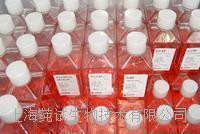 阪崎肠杆菌显色培养基(DFI琼脂)规格 CS-P1069
