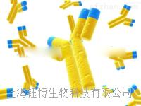 泛素羧基端酯酶L1(UCHL1)单克隆抗体